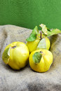 Fresh quinces composition of on green background Stock Photo