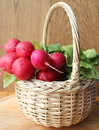 Fresh radish in a wicker basket close up Royalty Free Stock Images