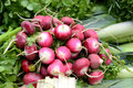 Fresh radishes bunch of radish for sale at the market Royalty Free Stock Photo