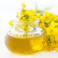 Fresh rapeseed oil Royalty Free Stock Photo