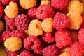 Fresh raspberries background. Royalty Free Stock Photos