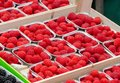 Fresh raspberries in boxes for sale in market of Brugge. Royalty Free Stock Photo