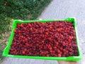 Fresh raspberries in plastic packaging