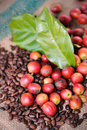 Fresh raw coffee beans with leaf Royalty Free Stock Image