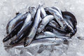 Fresh raw fish anchovy on ice Royalty Free Stock Photo