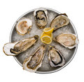 Fresh raw oysters Stock Image