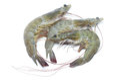 Fresh raw prawns Royalty Free Stock Photo