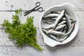 Fresh raw sardines on enamelled tray withparsley bouquet on rustic background with rust vintage scissor white wooden table Stock Photography