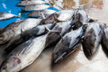 Fresh raw tuna fish in market Royalty Free Stock Photo