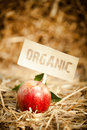 Fresh red apple on straw tagged as close up of tasty organic Stock Image