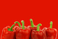 Fresh red bell peppers capsicum on a background Stock Images