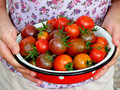 Fresh red and black cherry tomatoes in a metal bowl her hands Stock Image