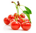 Fresh red cherries with green leaves Royalty Free Stock Photo