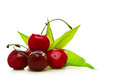 Fresh red cherries on a white background on a white background Stock Photos