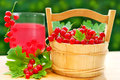 Fresh red currant and juice in wooden basket glass of on the garden table Stock Photography