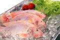 Fresh Red fish Royalty Free Stock Photo