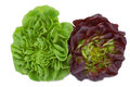 Fresh red and green lettuce  heads Royalty Free Stock Photography