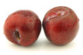 Fresh red plums on a white background Royalty Free Stock Image