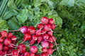 Fresh red radish stock heap with green in a street vegetable market Stock Images