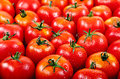Fresh red tomato in the drops of water. Royalty Free Stock Photo