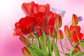 Fresh red tulips on abstract spring nature background beautiful Royalty Free Stock Images