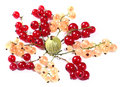 Fresh red, white currants and gooseberry Royalty Free Stock Photography