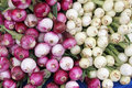 Fresh Red and White Onion Royalty Free Stock Photos
