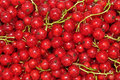 Fresh redcurrant background as texture Royalty Free Stock Photo