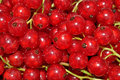 Fresh redcurrant close up as background Stock Image