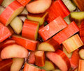 Fresh rhubarb Stock Images