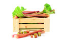 Fresh rhubarb in wooden crate picked on white background Stock Image