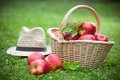 Fresh ripe apples in basket Royalty Free Stock Photography