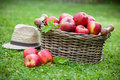 Fresh ripe apples in basket Royalty Free Stock Photo