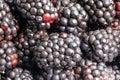 fresh ripe blackberries close-up Royalty Free Stock Photo