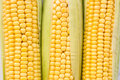Fresh ripe corn Royalty Free Stock Photo