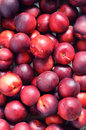 Fresh ripe nectarines Stock Photography