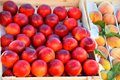 Fresh and ripe nectarines Royalty Free Stock Photo