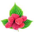 Fresh, ripe raspberries over green leaves, isolated on white background. Royalty Free Stock Photo