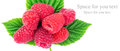 Fresh, ripe raspberries over green leaves,  on white background. Royalty Free Stock Photo