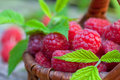 Fresh ripe raspberries Royalty Free Stock Photo