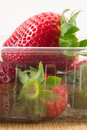 Fresh ripe strawberries in plastic punnet closeup of inside Royalty Free Stock Photo