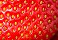 Fresh, ripe strawberry close-up. Macro photo of strawberry Royalty Free Stock Photo