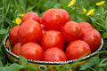 Fresh ripe tomatoes in a bowl on the grass Stock Image