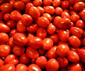 Fresh ripe tomatos Royalty Free Stock Photos