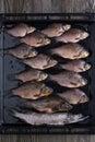Fresh river fish