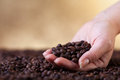 Fresh roasted coffee beans cupped woman hands closeup Stock Photography