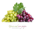 Fresh rose and green grapes Stock Image