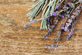 Fresh rosemary Royalty Free Stock Images