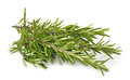 Fresh rosemary Royalty Free Stock Photos