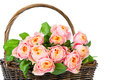 Fresh roses in the basket isolated on white background Royalty Free Stock Photography